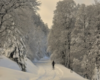 a winter scene with a man walking through it
