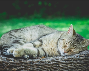 Tabby cat sleeping on a wicker basket